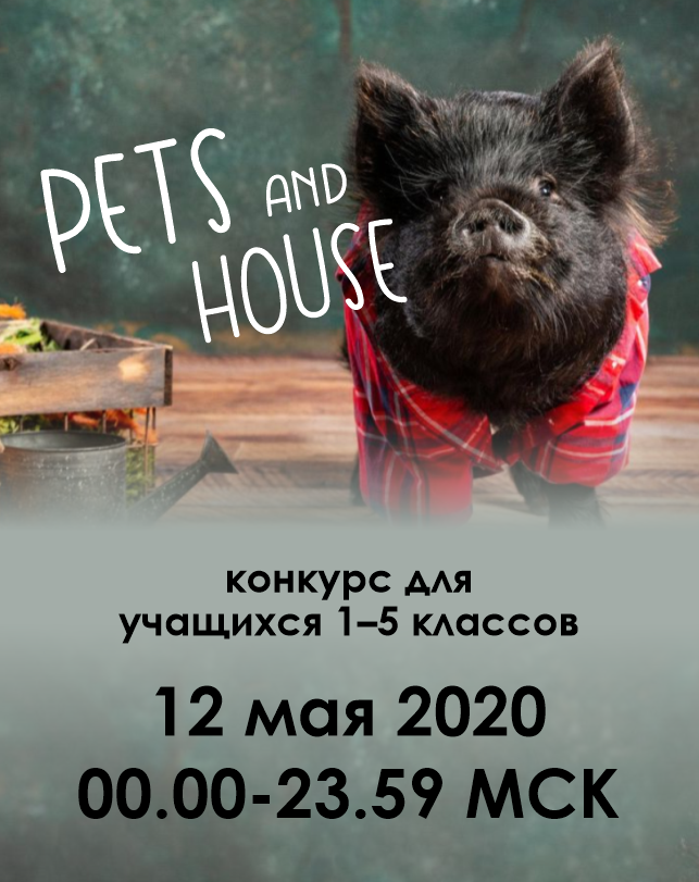 Pets and house